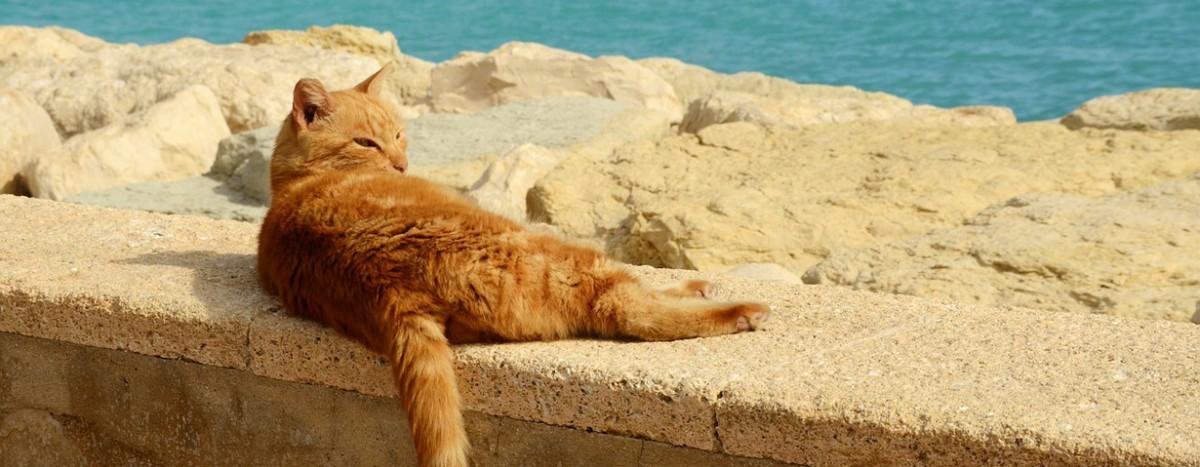 Anhaltende Hitzewelle– das brauchen jetzt unsere Katzen