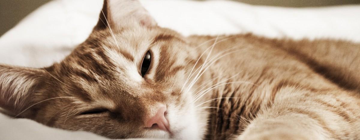 AfT-Sommersymposium – Allergien beim Kleintier