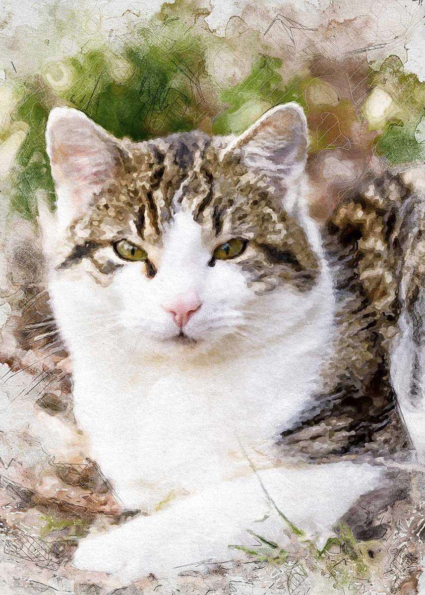 wie-gemalt.de: Leinwandbild nach einer Fotovorlage einer Katze