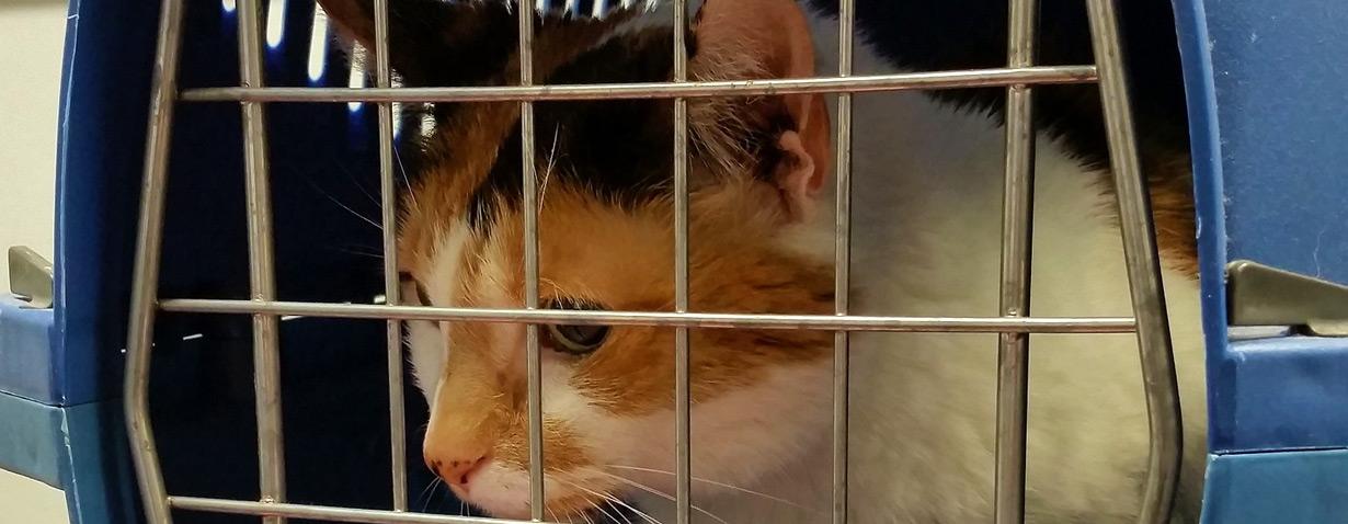 Mit Meerschweinchen, Hund und Katze stressfrei beim Tierarzt