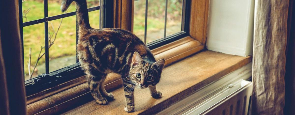 Lebensgefahr für Katzen – gekippte Fenster sind unterschätzte Fallen
