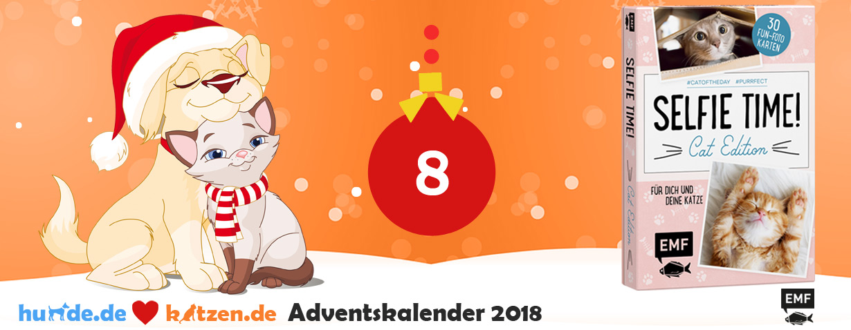Gewinnspiel: SELFIE TIME! Cat Edition – 30 Fun-Fotokarten