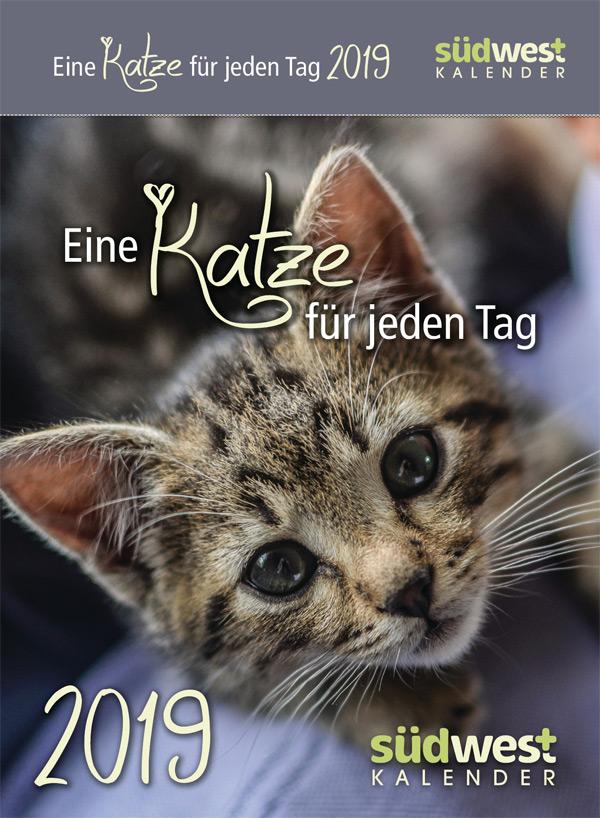Eine Katze für jeden Tag 2019 - Tagesabreißkalender