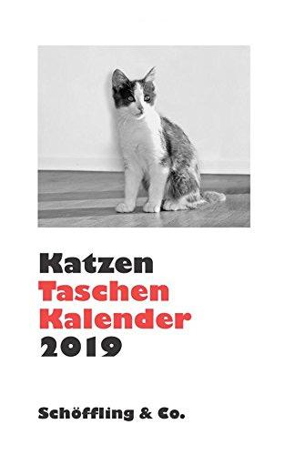 Julia Bachstein - Katzen Taschenkalender 2019