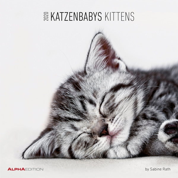Wandkalender Katzenbabys / Kittens 2020 von Sabine Rath
