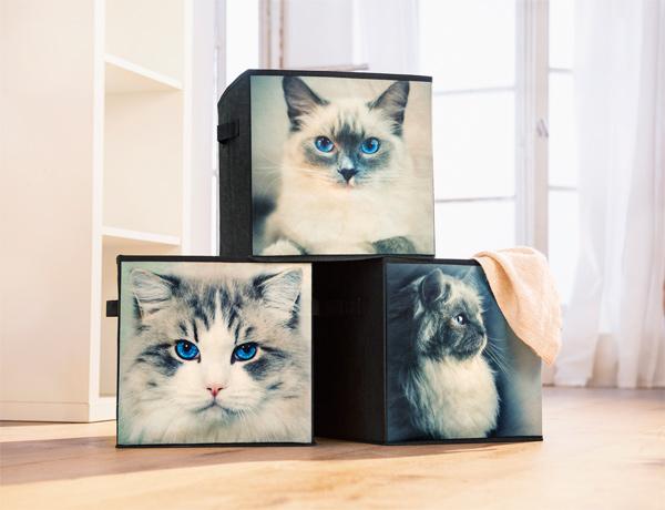 Faltbare Aufbewahrungsboxen, 3er Set, im Katzen-Design