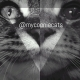 Mycooniecats